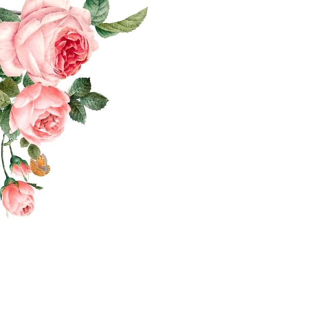 Ręcznie rysowane różowe róże ramki na białym tle wektor