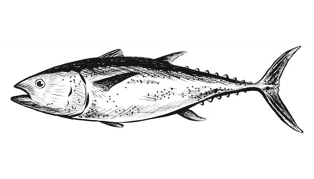 Ręcznie rysowane ryby łosoś na białym tle