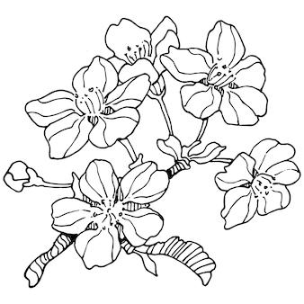 Ręcznie rysowane sakura kwiatowy, grawerowanie vintage ilustracji