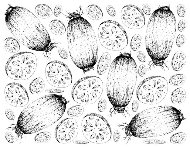 Ręcznie rysowane skecth tło świeżych korzeni lotosu