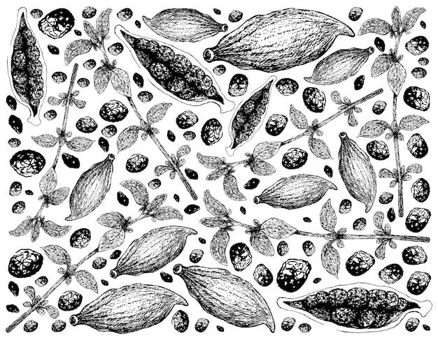 Ręcznie rysowane strąki tymianku i kardamonu