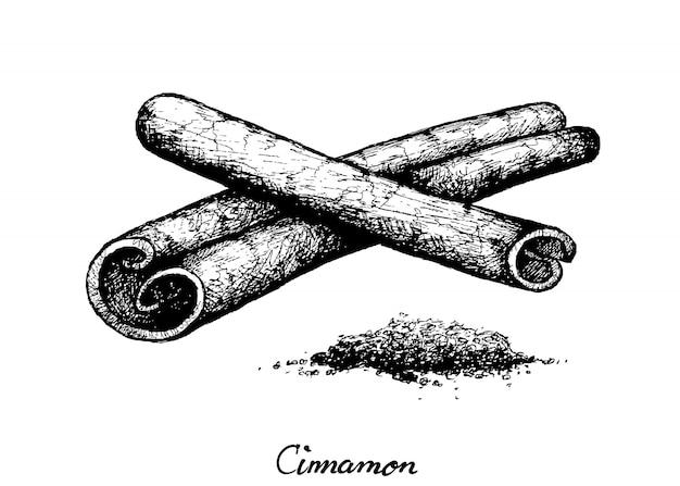 Ręcznie rysowane suszone laski cynamonu na białym tle