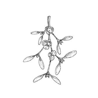 Ręcznie rysowane świąteczne liście jemioły oddział z jagodami ilustracji wektorowych streszczenie szkic zima...
