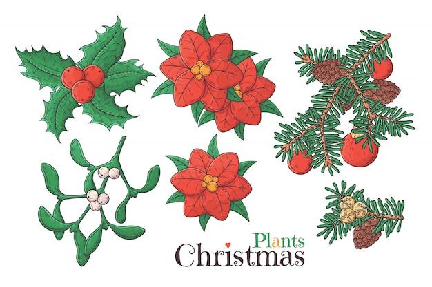 Ręcznie rysowane świąteczne rośliny wektor.