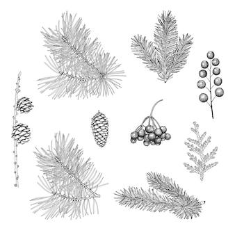 Ręcznie rysowane świąteczne rośliny.