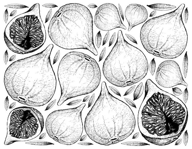 Ręcznie rysowane świeże owoce figowe