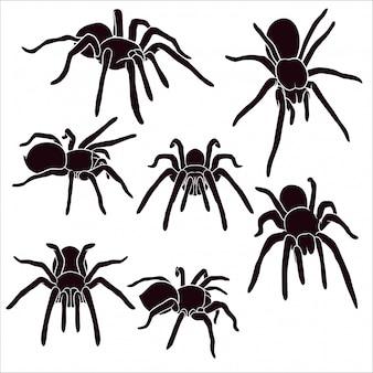 Ręcznie rysowane sylwetka tarantula