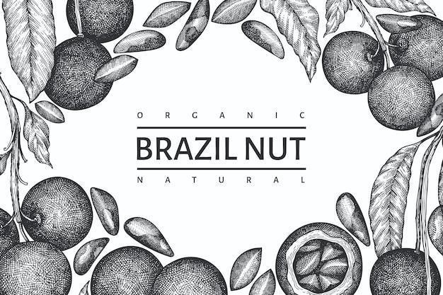 Ręcznie rysowane szablon gałęzi orzechów brazylijskich i jąder. ilustracja żywności ekologicznej na białym tle. ilustracja retro nakrętki. grawerowany baner botaniczny w stylu.