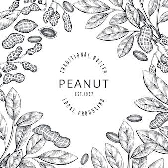 Ręcznie rysowane szablon projektu gałęzi i jąder orzechowych. ilustracja żywności ekologicznej na białym tle. tło retro nakrętki. obraz botaniczny w stylu grawerowanym.