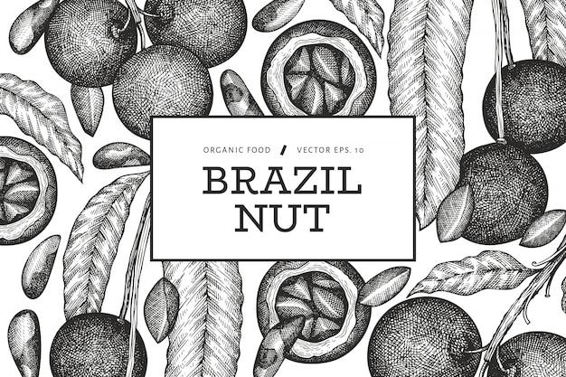 Ręcznie rysowane szablon projektu gałęzi orzechów brazylijskich i jąder. ilustracja wektorowa żywności ekologicznej na białym tle. ilustracja rocznika nakrętki. grawerowany baner botaniczny w stylu.