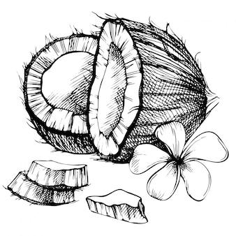 Ręcznie rysowane szkic kokosowe. szkic ilustracji tropikalne jedzenie. zabytkowy styl