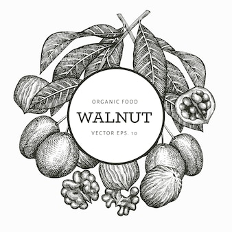 Ręcznie rysowane szkic orzecha włoskiego. ilustracja żywności ekologicznej. vintage ilustracji orzechów. grawerowane tło botaniczne stylu.