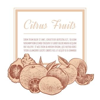 Ręcznie rysowane szkic pomarańczy, zbiory egzotycznych owoców cytrusowych. cytryny, grejpfruty i limonki