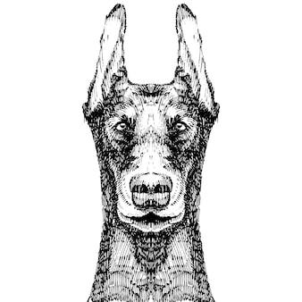 Ręcznie rysowane szkic stylu doberman pies na czarnym tle