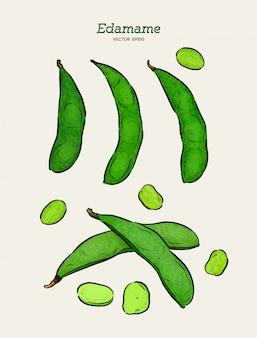 Ręcznie rysowane szkic stylu edamame zestaw zielony szkice fasoli. wegańskie i wegetariańskie jedzenie. świeży produkt rolny. ilustracje wektorowe