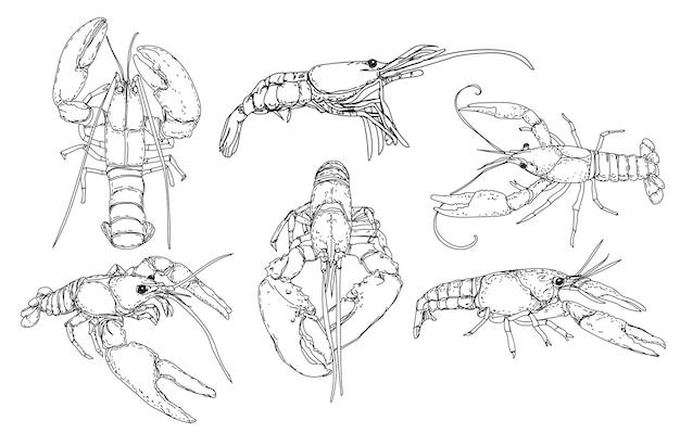 Ręcznie rysowane szkic stylu owoce morza.