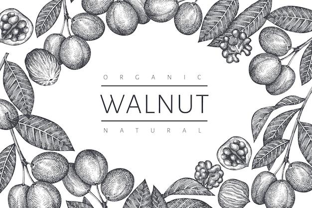 Ręcznie rysowane szkic szablon orzecha włoskiego. ilustracja żywności ekologicznej. ilustracja retro nakrętki. tło botaniczne w stylu grawerowanym.