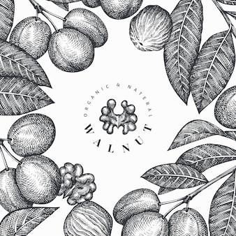 Ręcznie rysowane szkic szablon orzecha włoskiego. ilustracja żywności ekologicznej. ilustracja retro orzechów.