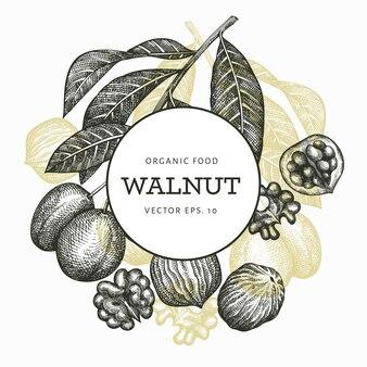 Ręcznie rysowane szkic szablon orzecha włoskiego. ilustracja żywności ekologicznej. vintage ilustracji orzechów. grawerowane tło botaniczne stylu.