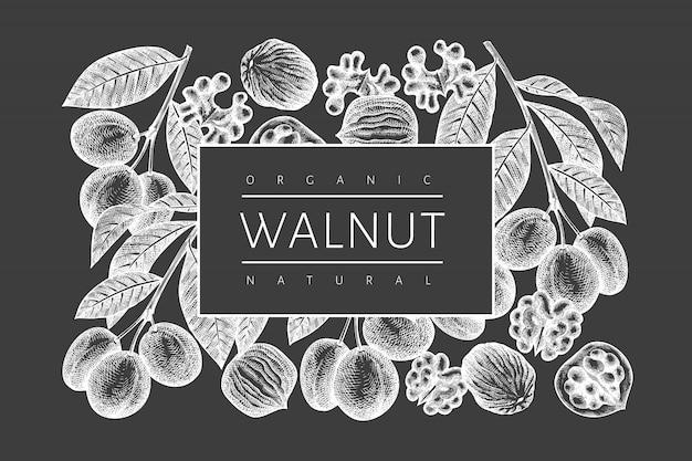 Ręcznie rysowane szkic szablonu projektu orzecha włoskiego. ilustracja wektorowa żywności ekologicznej na tablicy kredowej. ilustracja rocznika nakrętki. tło botaniczne w stylu grawerowanym.