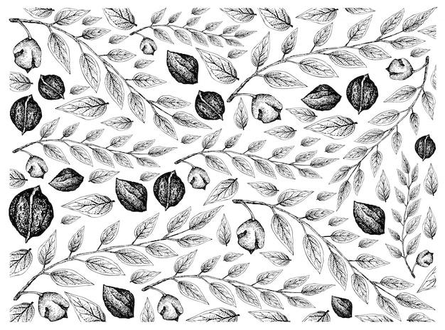 Ręcznie rysowane szkic tło czarne orzechy włoskie