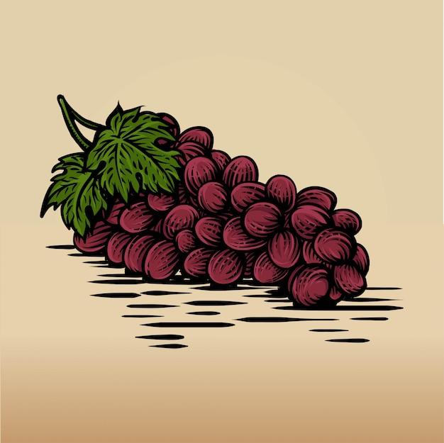 Ręcznie rysowane szkic winogron w kolorowe. szczegółowy rysunek potraw wegetariańskich.