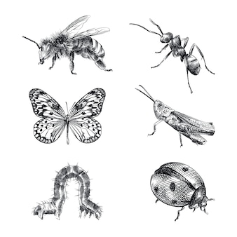 Ręcznie rysowane szkic zestaw owadów. zestaw składa się z pszczoły, osy, mrówki, motyla, konika polnego, gąsienicy, biedronki