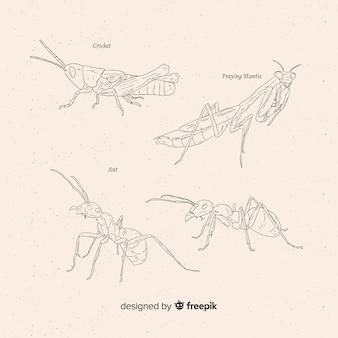 Ręcznie rysowane szkice owadów kolekcji