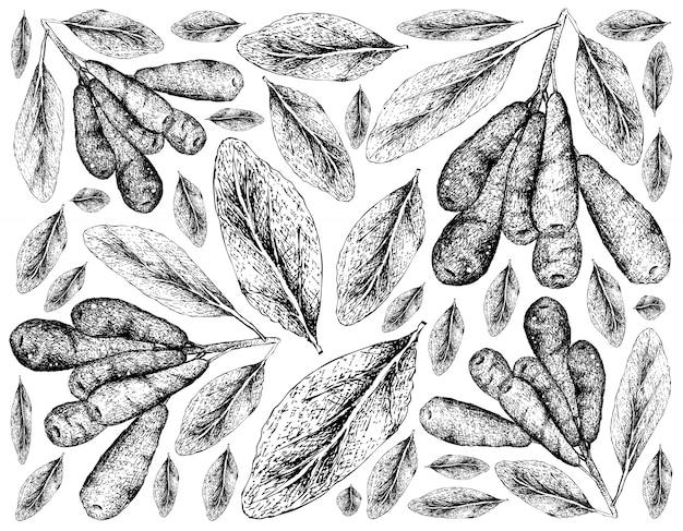 Ręcznie rysowane tapety honeyberries na białym tle