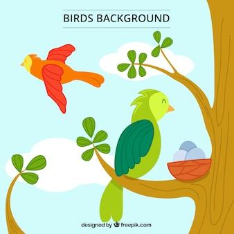 Ręcznie rysowane tła ładne papugi