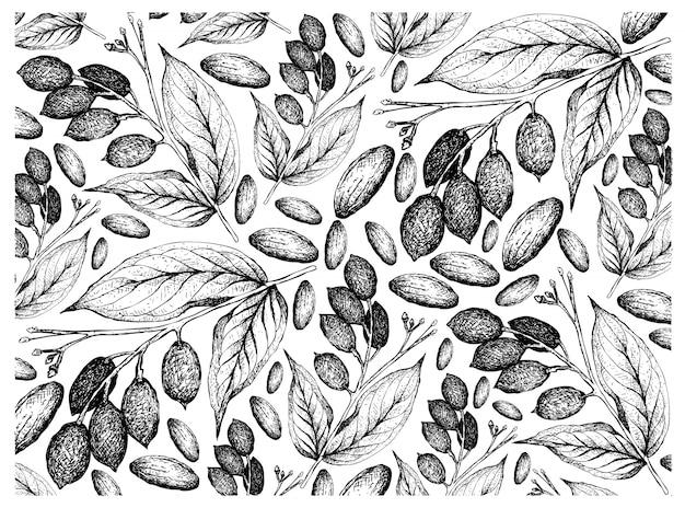 Ręcznie rysowane tła orzechów galip