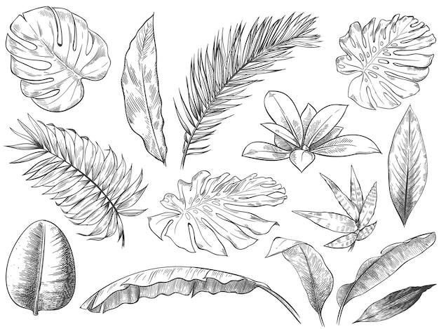 Ręcznie rysowane tropikalne liście. szkic liści roślin tropikalnych, zestaw ilustracji egzotycznych liści kwiatowy.
