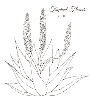 Ręcznie rysowane tropikalnych kwiatów