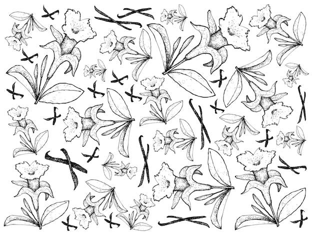 Ręcznie rysowane wanilii kwiaty i strąki tło