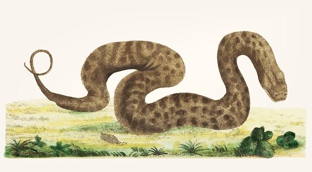 Ręcznie rysowane warting snake