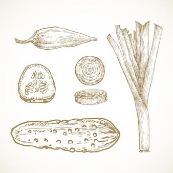 Ręcznie rysowane warzywa i zioła wektor zbiory ilustracji. zestaw szkiców pora cebuli, papryki jalapeno, marynaty i ogórka. doodle naturalnej żywności. odosobniony.