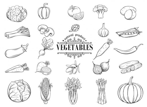 Ręcznie rysowane warzywa zestaw ikon. dekoracyjny