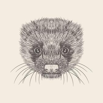 Ręcznie rysowane wektor ilustracja twarz szczura