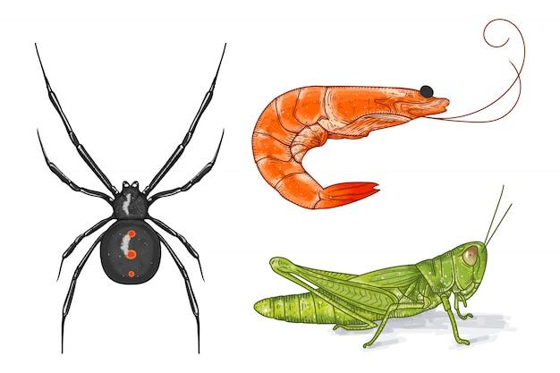 Ręcznie rysowane wektor zestaw kolekcja zwierząt. czarna wdowa, krewetki i konik polny w ręcznie malowanym stylu ilustracji wektorowych.