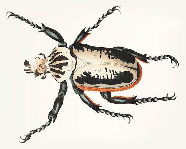 Ręcznie rysowane widelec na czele chrząszcza