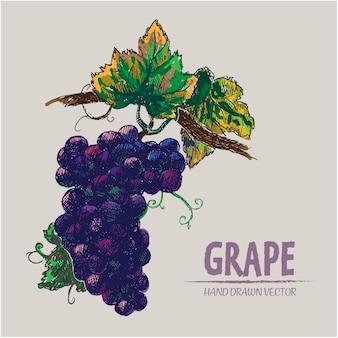 Ręcznie rysowane winogrona projekt