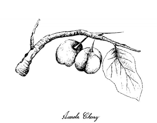 Ręcznie rysowane wiśni acerola na białym tle