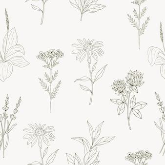 Ręcznie rysowane wzór z ziołami