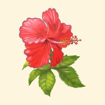 Ręcznie rysowane z chińskiej róży