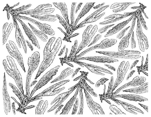 Ręcznie rysowane z dulse lub dillisk wodorostów na białym tle