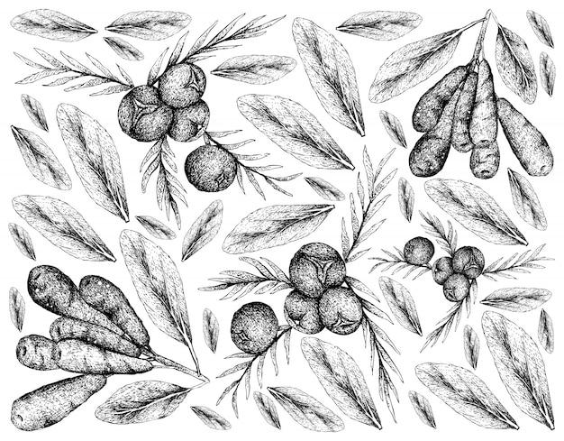 Ręcznie rysowane z jagód jałowca i tła honeyberries