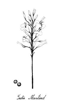 Ręcznie rysowane z musztardy indyjskiej na białym tle