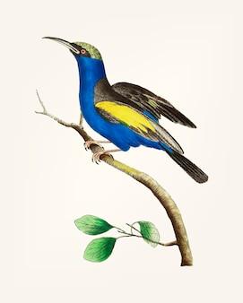 Ręcznie rysowane z niebieskim pnączem