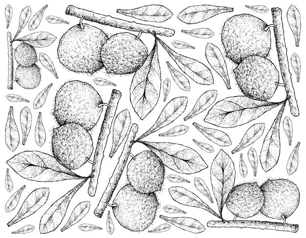 Ręcznie rysowane z owoców aboirana na białym tle