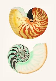 Ręcznie rysowane z wielkiego nautilus